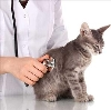 Ветеринарные клиники в Казачинском